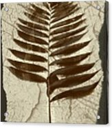 Palm Fossil Sandstone  Acrylic Print
