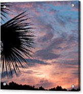 Palm Frond At Dusk Acrylic Print
