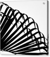 Palm Frond Black And White Acrylic Print