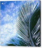 Palm Fronds And Clouds Acrylic Print
