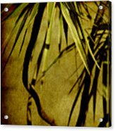 Palm Fronds Are Green Acrylic Print