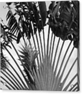 Palm Frons Acrylic Print
