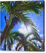 Palm Gazing Acrylic Print