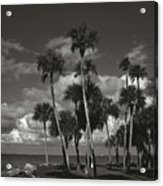 Palm Group In Florida Bw Acrylic Print