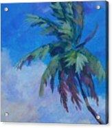 Palm In Evening Light Acrylic Print