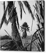 Palm In View Bw Horizontal Acrylic Print