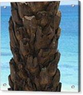 Palm Acrylic Print