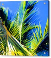 Palm Leaves Against The Sky 3 Ae  Acrylic Print