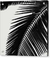 Palm Leaves Bw Acrylic Print