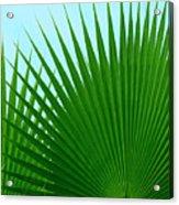 Palm Leaves Acrylic Print
