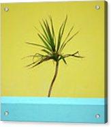 Palm On Porch Acrylic Print