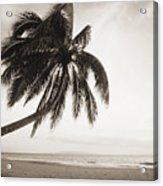 Palm Over Beach Acrylic Print