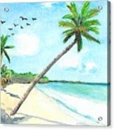Palm Over Diani Beach Acrylic Print