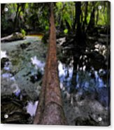 Palm Over Spring Acrylic Print