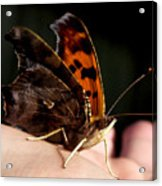 Palm Pilot Acrylic Print
