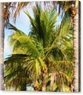 Palm Portrait Acrylic Print