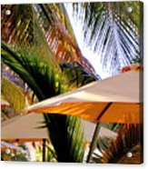 Palm Serenity Acrylic Print