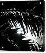Palm Silhouettes Kaanapali Acrylic Print