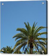 Palm Sky Acrylic Print