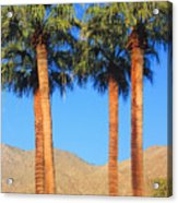 Palm Springs Acrylic Print