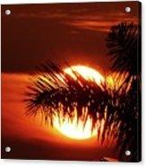 Palm Sunset Acrylic Print