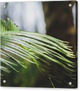 Palm Tree 5 Acrylic Print