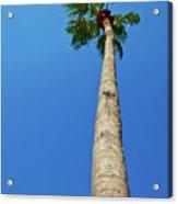 Palm Tree Against Blue Sky Acrylic Print