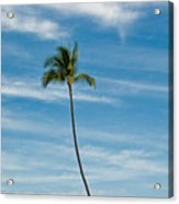Palm Tree And Clouds Acrylic Print