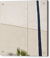 Palm Tree And Shadows Acrylic Print