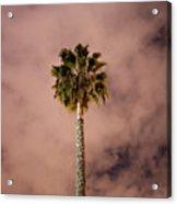 Palm Tree At Night Acrylic Print