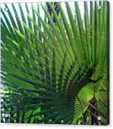 Palm Tree, Big Leafs Acrylic Print