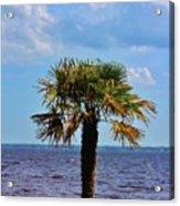 Palm Tree By The Lake Acrylic Print
