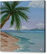 Palm Tree Acrylic Print