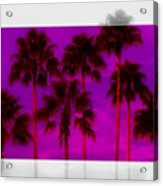 Palm Tree Heaven Acrylic Print