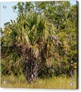 Palm Tree In Golden Grass Acrylic Print