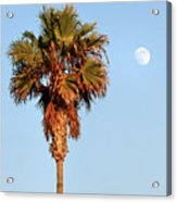 Palm Tree In Huntington Beach Acrylic Print