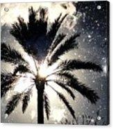 Palm Tree In The Sun #3 Acrylic Print