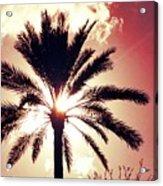 Palm Tree In The Sun Acrylic Print