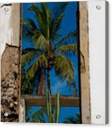 Palm Tree In The Window Acrylic Print