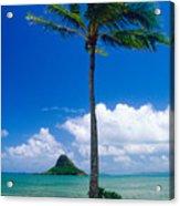 Palm Tree On The Beach Kaneohe Bay Oahu Hawaii Acrylic Print