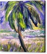 Palm Tree On Windy Beach Acrylic Print