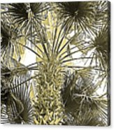 Palm Tree Pen And Ink Grayscale With Sepia Tones Acrylic Print