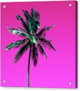 Palm Tree Puerto Rico Acrylic Print