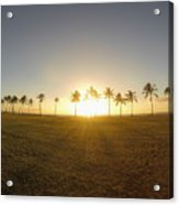 Palm Tree Sunset Acrylic Print