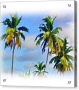 Palm Trees - 5 Acrylic Print