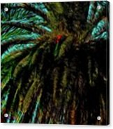Palm Trees 40 Version 2 Acrylic Print