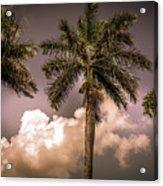 Palm Trees Against Beautiful Sky Acrylic Print