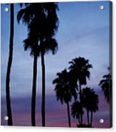 Palm Trees At Sunset Acrylic Print