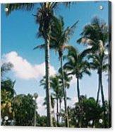 Palm Trees Acrylic Print