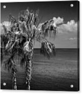 Palm Trees In Black And White At Laguna Beach Acrylic Print